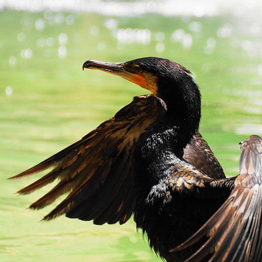 直接、鳥の姿を見ることができる鳥の楽園、および周辺エリア